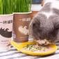 尾巴生活一杯猫草去毛球猫草种子调理肠胃促进猫猫消化