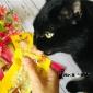 猫零食肉条条妙鲜湿粮包幼猫成年猫罐头营养小鱼干猫咪零食一件发